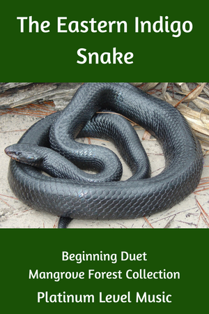Paloma Piano Eastern Indigo Snake